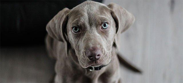 I cani sanno dire le bugie, lo dice una ricerca