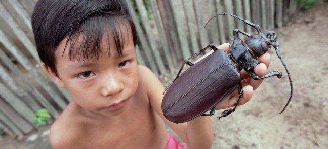 Ecco uno degli insetti più grandi al mondo