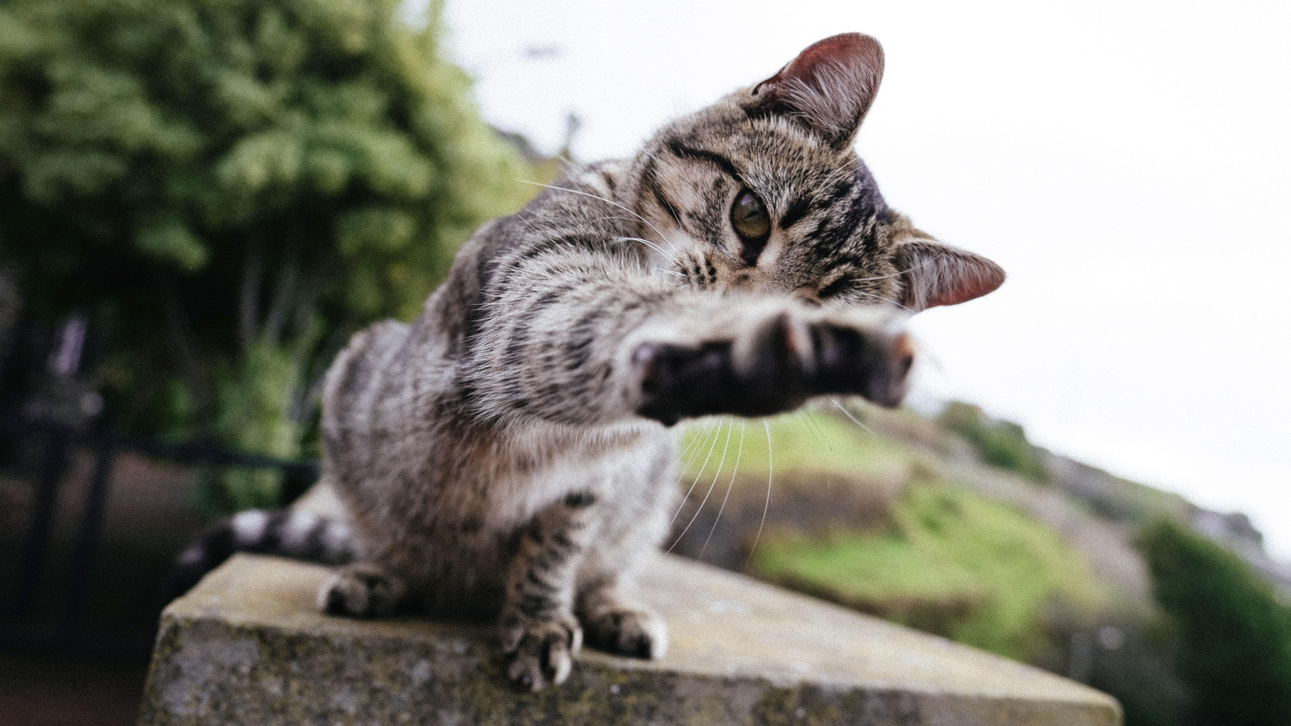 Ai gatti piace ascoltare la musica classica