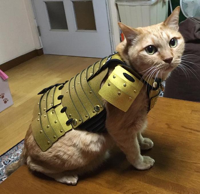 Costumi da samurai per cani e gatti: la nuova moda 2