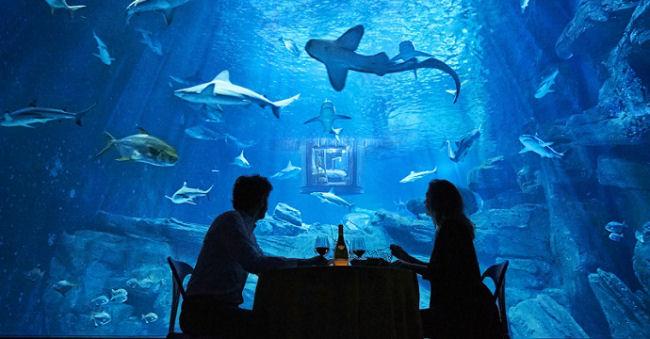 Dormire tra gli squali dell'acquario di Parigi 2