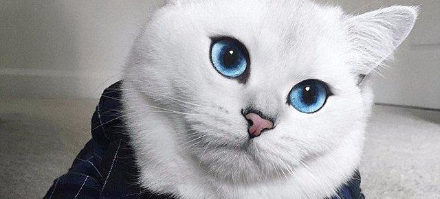Il gatto con gli occhi più belli al mondo