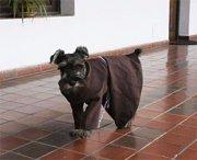 Monastero adotta un cane e lo fa diventare un vero frate