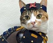 Costumi da samurai per cani e gatti: la nuova moda