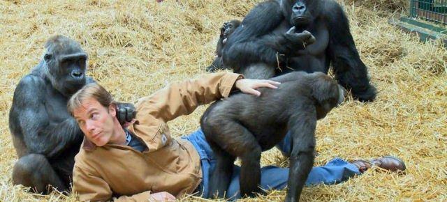 Milionario dedica la vita ai gorilla