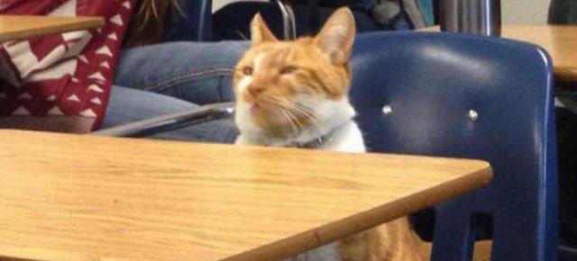 Il gatto iscritto alle scuole superiori