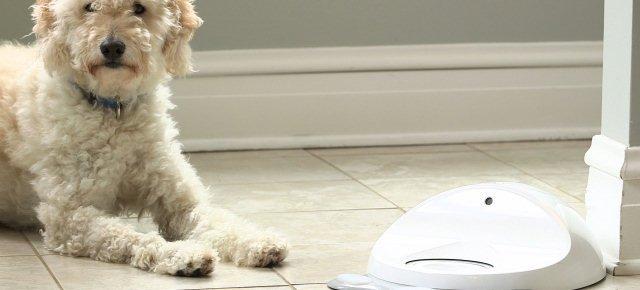 In arrivo una nuova console per cani
