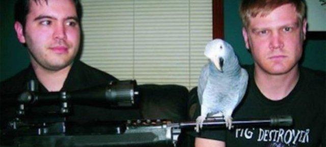 Il pappagallo che canta death metal