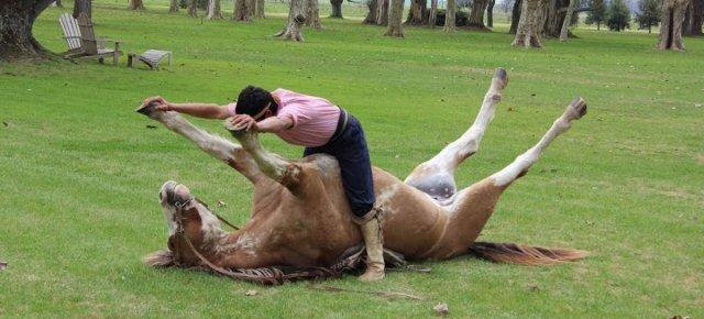Il vero uomo che sussurra ai cavalli