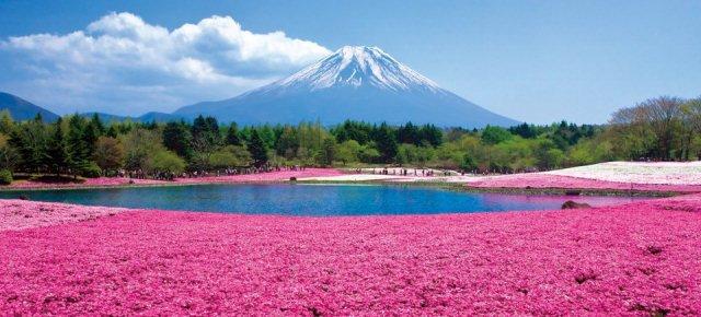 La collina rosa di Hokkaido
