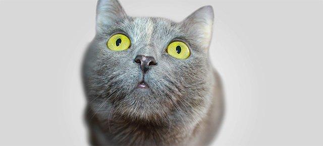 CryptoKittens: diventare ricchi coi gattini virtuali