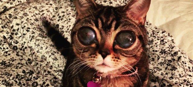 Matilda, la gatta con gli occhi da alieno