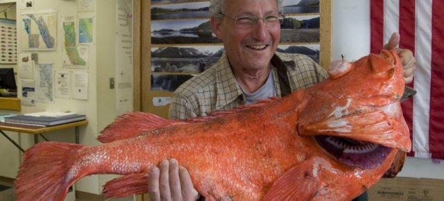 Alaska: pescato un pesce di 200 anni