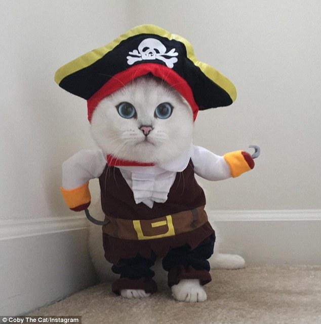 Coby, il gatto con gli occhi più belli al mondo 3