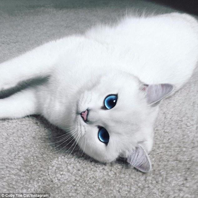 Coby, il gatto con gli occhi più belli al mondo 4
