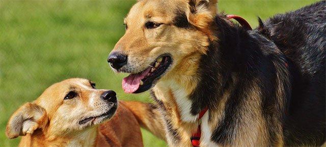 Si prende cura di 735 cani che nessuno vuole