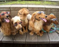 Primo concerto per soli cani