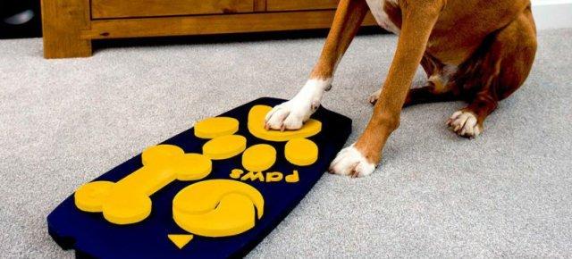 Il telecomando della tv per cani