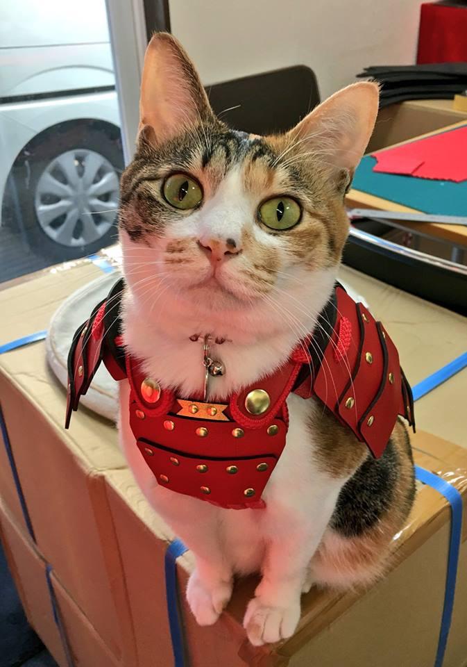 Costumi da samurai per cani e gatti: la nuova moda 3