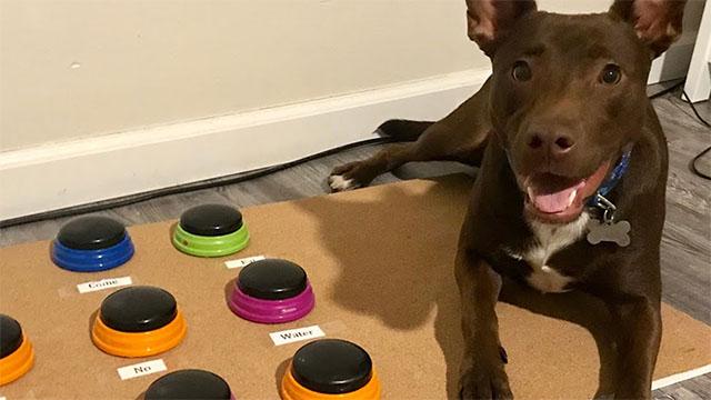 Stella, il cane parlante