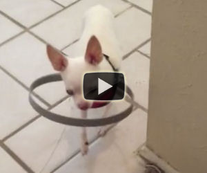 Il cane è completamente cieco, ecco il modo per dargli sicurezza