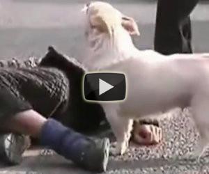Un uomo sviene nel centro della strada, ecco cosa fa il suo cane