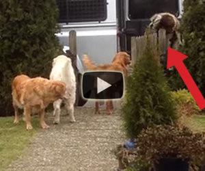 Torna dal supermercato ed ecco cosa fanno i suoi cani!