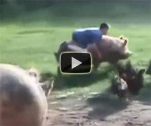 Cavalcare un maiale da corsa