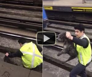 Il conducente ferma il suo treno per salvare un cane sui binari