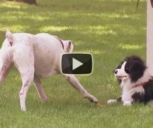 Divertenti scherzi fatti ai cani