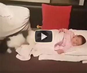 Allontanano il gatto dalla bambina ma lui non ne vuole sapere
