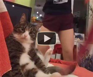 Questo gatto è sconvolto dal ballo della padrona su TikTok