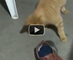 Il gatto vuole che il topo torni a casa
