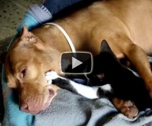 Immenso amore tra un cane e un gatto