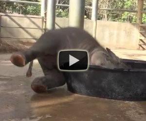 Un elefantino sta combinando un disastro, ma arriva la madre e...