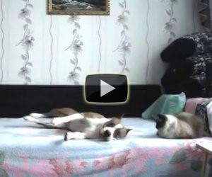 Quando il cane resta a casa da solo