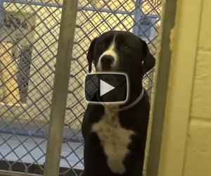 La tenera reazione di un cane che torna libero dopo giorni in canile