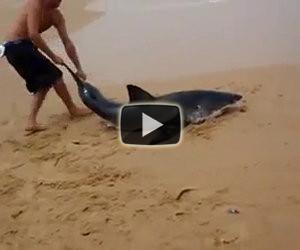 Questo ragazzo salva uno squalo bianco spiaggiato