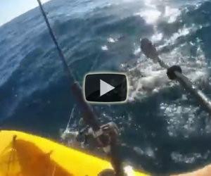 Uomo in canoa viene assalito da uno squalo, ecco come si difende