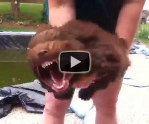 Trasformare un cucciolo in bestia