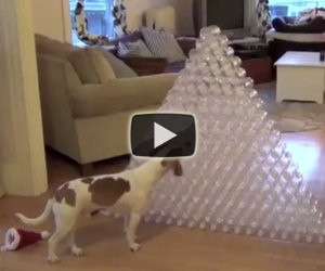 Un cane e 210 bottiglie di plastica vuote