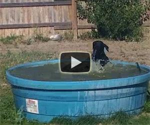 Questo cane si gode un bel bagno in piscina