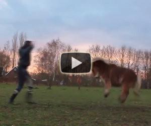 Un dolcissimo pony scatenato