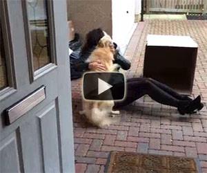 Fa una sorpresa al proprio cane: la sua gioia è incontenibile