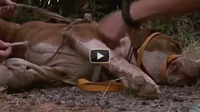 Un cane abbandonato e legato vivo viene salvato da degli angeli