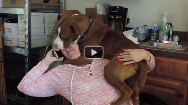 Questo cane è appena stato salvato, ecco cosa fa alla sua nuova padrona