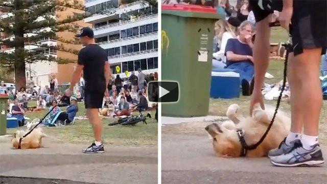 Questo cane si finge morto per non andare via dal parco
