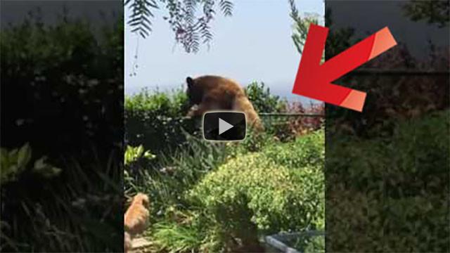 Due cani trovano una grossa sorpresa in giardino