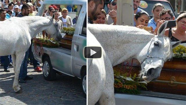 La straziante reazione del cavallo al funerale del proprio padrone