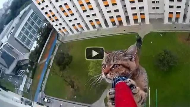 Il gattino è in una brutta situazione, ecco cosa fanno per salvarlo